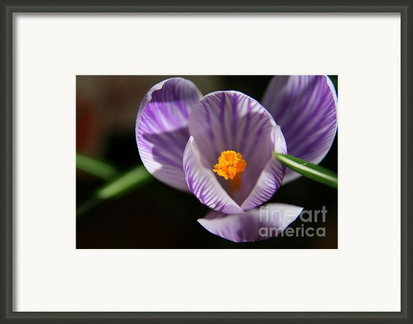 Remembrance Framed Print By Neal  Eslinger