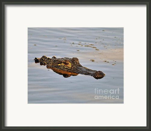 Reptile Reflection Framed Print By Al Powell Photography Usa
