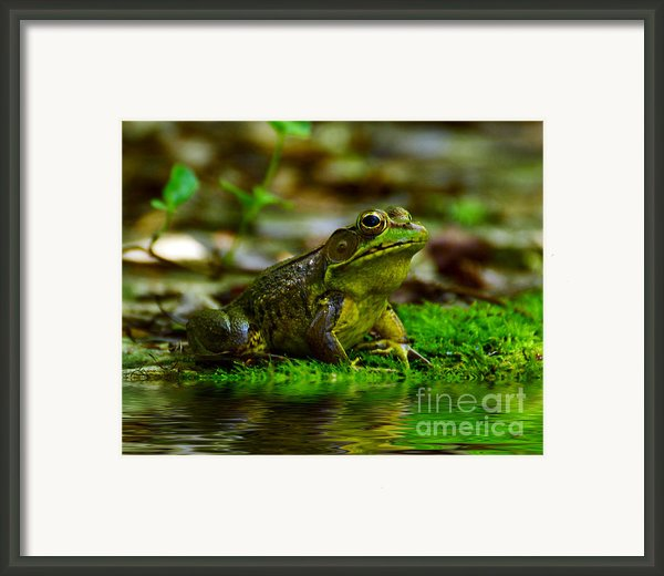 Resting In The Shade Framed Print By Kathy Baccari
