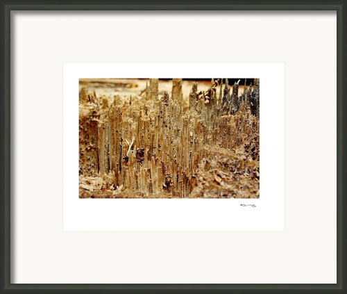 Ripped 2 Framed Print By Xoanxo Cespon