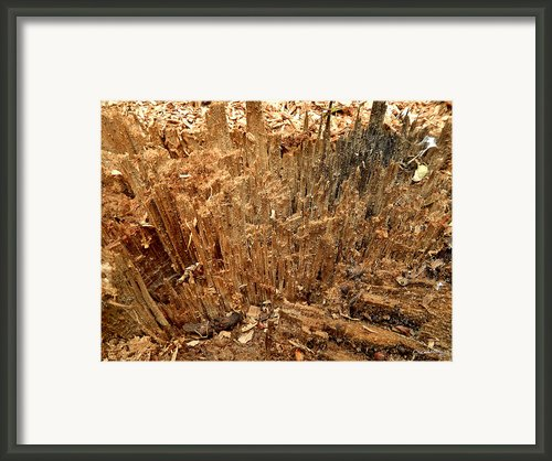 Ripped Framed Print By Xoanxo Cespon