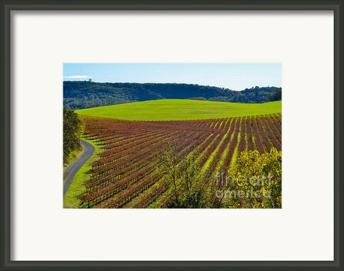 Rolling Hills And Vineyards Framed Print By Cml Brown