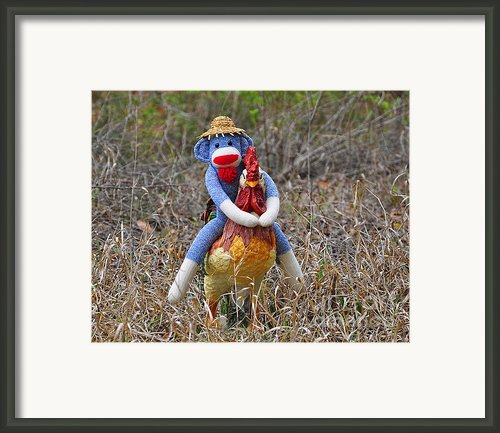Rooster Rider Framed Print By Al Powell Photography Usa