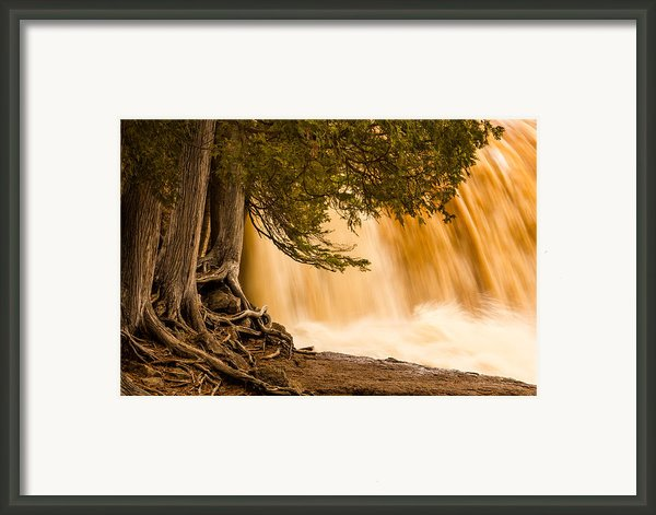 Rooted In Spring Framed Print By Mary Amerman
