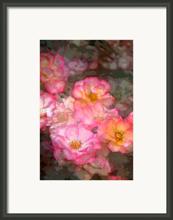 Rose 210 Framed Print By Pamela Cooper