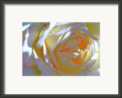 Rose Framed Print By N S