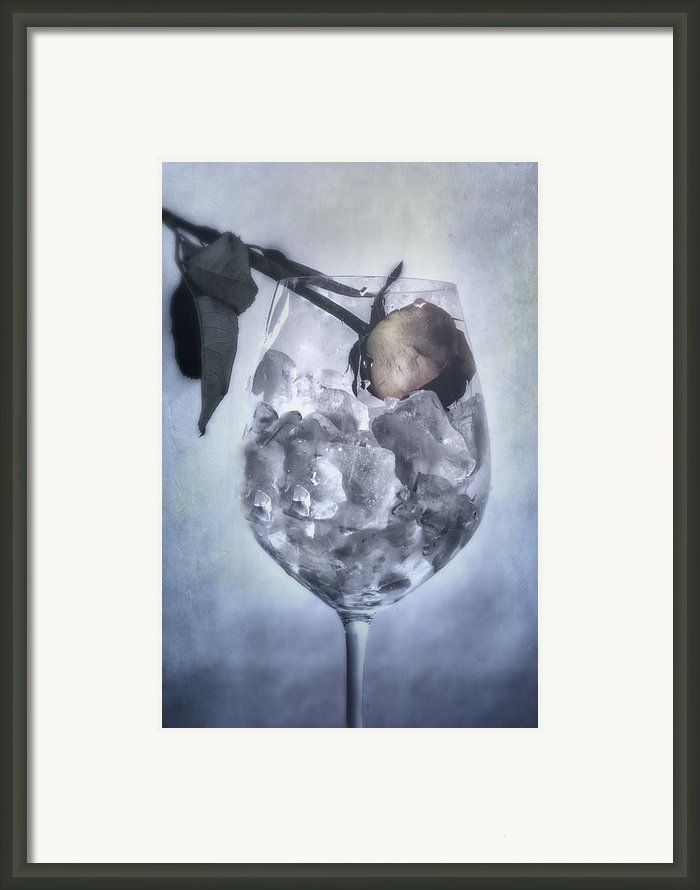 Rose On The Rocks Framed Print By Joana Kruse