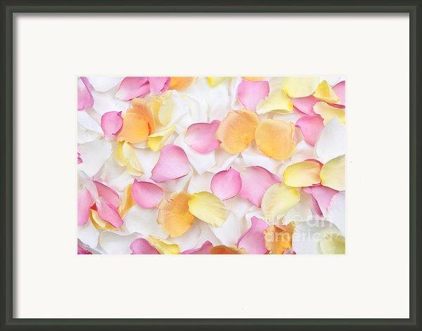 Rose Petals Background Framed Print By Elena Elisseeva