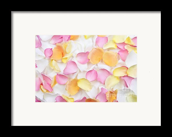 Rose Petals Background Framed Print By Elena Elisseeva