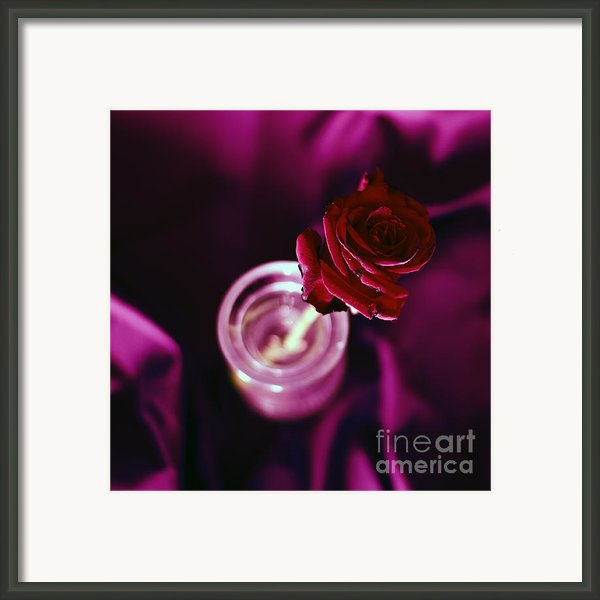 Rose Framed Print By Stylianos Kleanthous