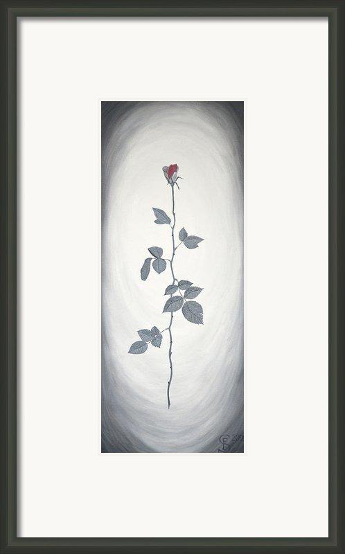 Rose Framed Print By Sven Fischer