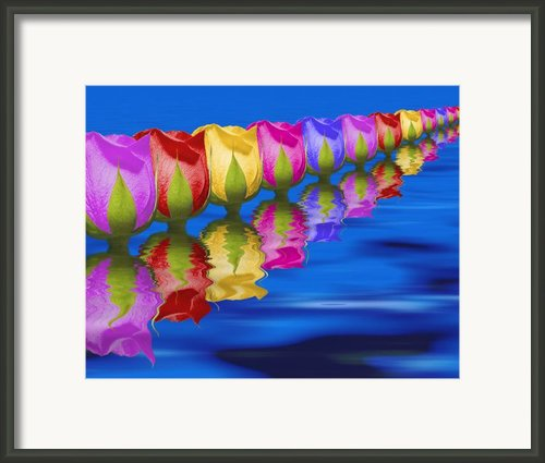 Roses Floating Framed Print By Tom Mc Nemar
