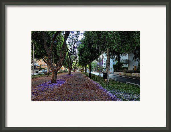 Rothschild Boulevard Framed Print By Ron Shoshani