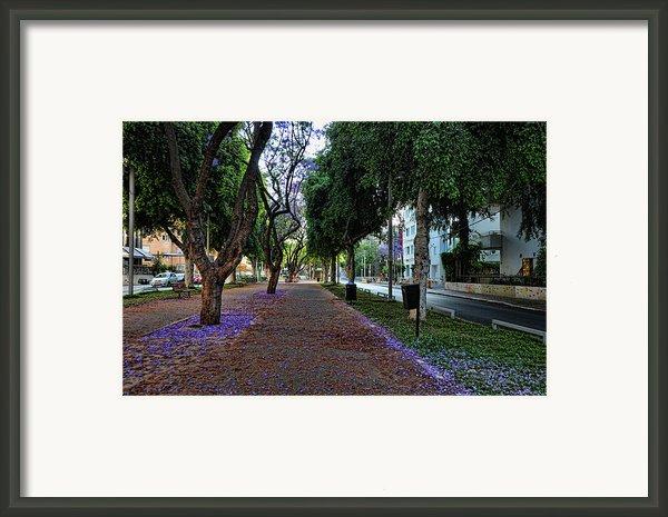 Rothschild Boulevard Framed Print By Ron Shoshani