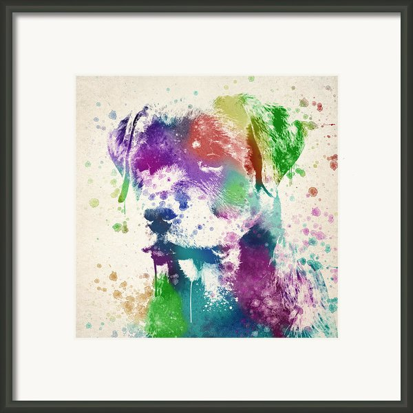 Rottweiler Splash Framed Print By Aged Pixel