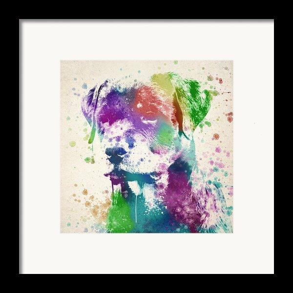 Rottweiler Splash Framed Print By Aged Pixel