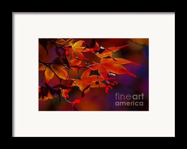 Royal Autumn A Framed Print By Jennifer Apffel