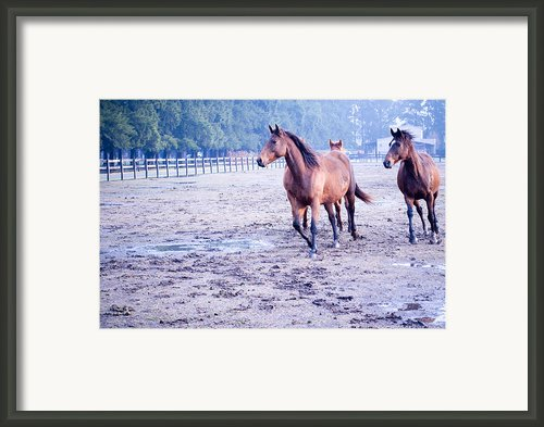 Running Horses Framed Print By Brian Kenneth