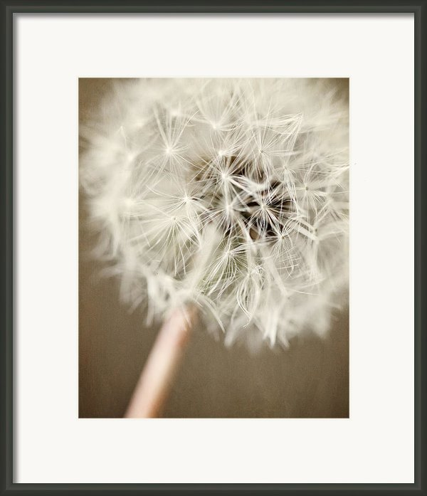 Rustic Dandelion In Shades Of Brown And Beige Framed Print By Lisa Russo