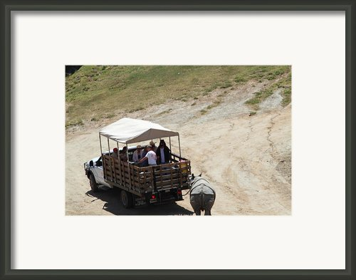 San Diego Zoo - 1212259 Framed Print By Dc Photographer
