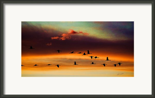 Sandhill Cranes Take The Sunset Flight Framed Print By Bill Kesler