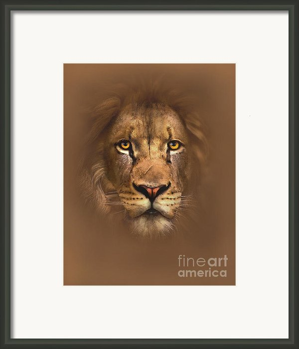 Scarface Lion Framed Print By Robert Foster