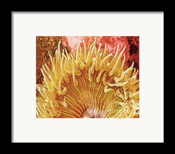 Sea Anenome Stretch Framed Print By Artist And Photographer Laura Wrede
