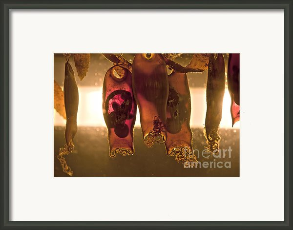 Sea Creature Pictures- Shark Eggs Framed Print By Artist And Photographer Laura Wrede