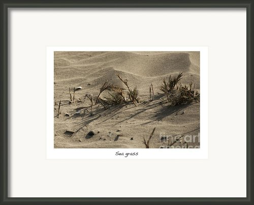 Sea Grass Framed Print By Author And Photographer Laura Wrede