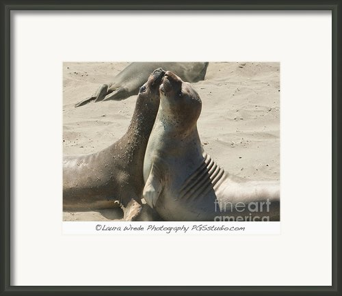 Sea Lion Love From The Book My Ocean Contact Laura Wrede To Purchase This Print Framed Print By Author And Photographer Laura Wrede