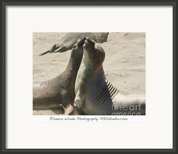 Sea Lion Love From The Book My Ocean Contact Laura Wrede To Purchase This Print Framed Print By Artist And Photographer Laura Wrede