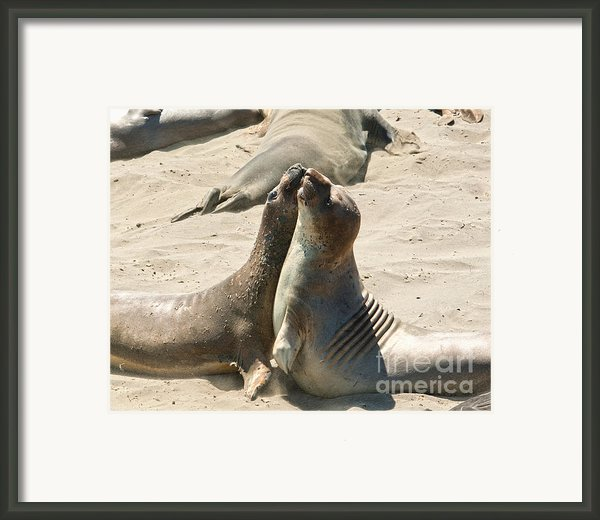 Sea Lion Love From The Book My Ocean Framed Print By Author And Photographer Laura Wrede
