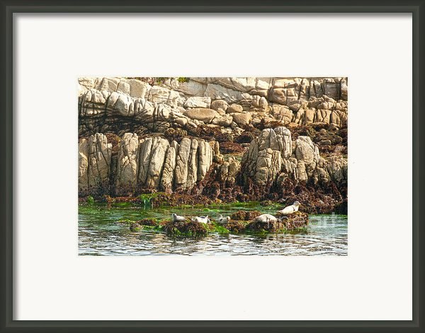 Sea Lions In Monterey Bay Framed Print By Artist And Photographer Laura Wrede