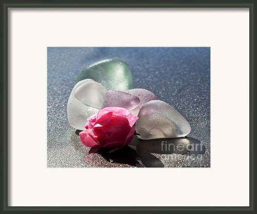Sea Rose Framed Print By Barbara Mcmahon