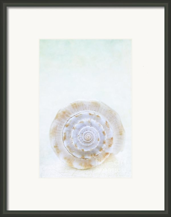 Sea Shell Framed Print By Stephanie Frey