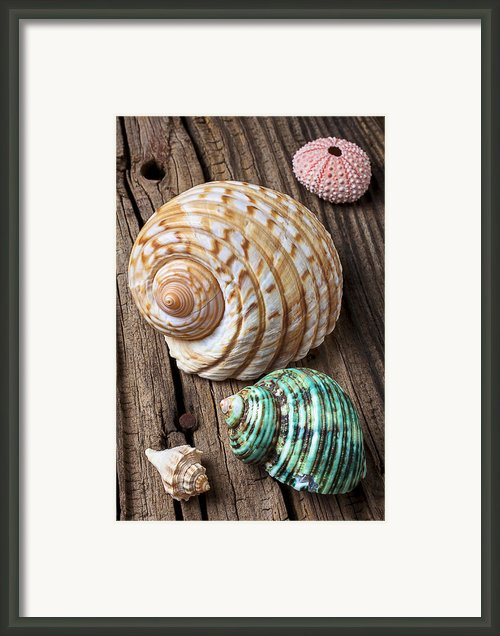 Sea Shells With Urchin  Framed Print By Garry Gay
