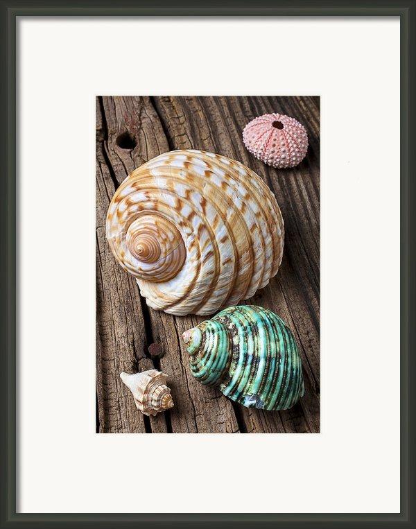 Sea Shells With Urchin  Framed Print By Garry Gay