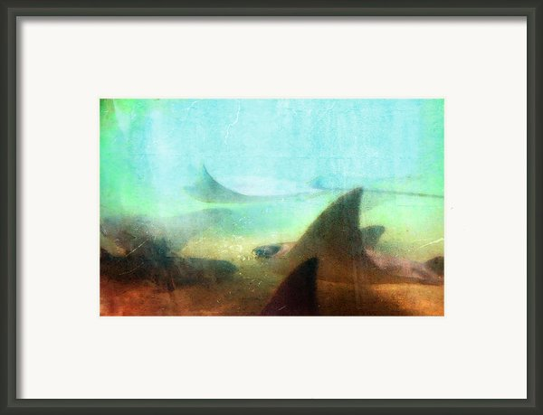 Sea Spirits - Manta Ray Art By Sharon Cummings Framed Print By Sharon Cummings