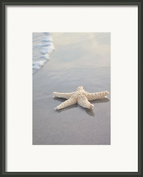Sea Star Framed Print By Samantha Leonetti