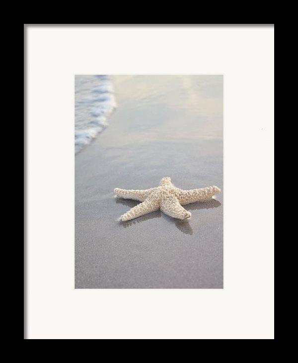 Sea Star Framed Print By Samantha Leonetti