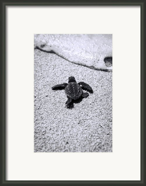 Sea Turtle Framed Print By Sebastian Musial