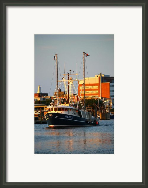 Seafox At Sunset Framed Print By John And Veronica Vandenburg