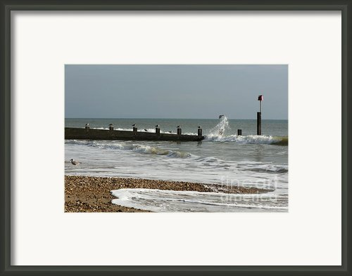 Seagull Groyne Framed Print By Anne Gilbert