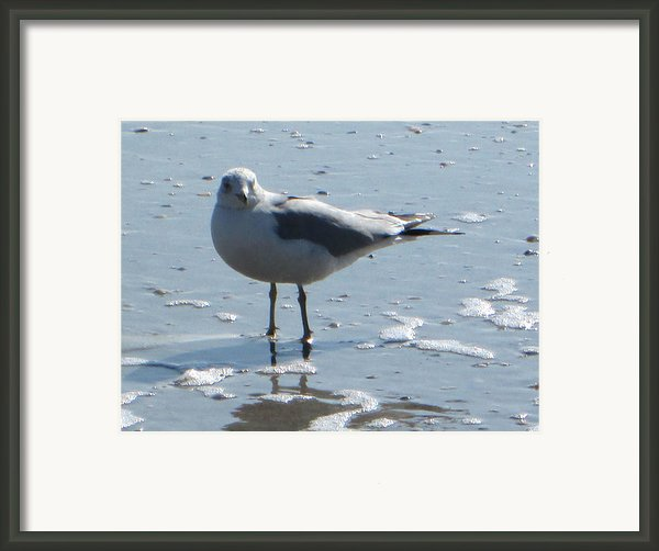 Seagull Framed Print By Silvie Kendall