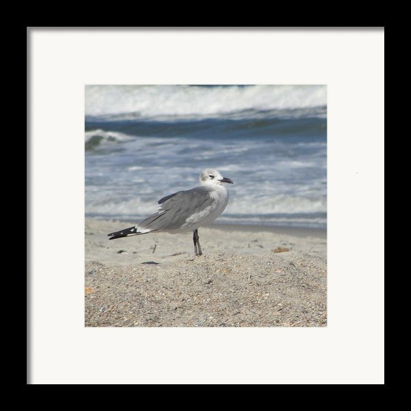 Seagulls At Fernandina 2 Framed Print By Cathy Lindsey