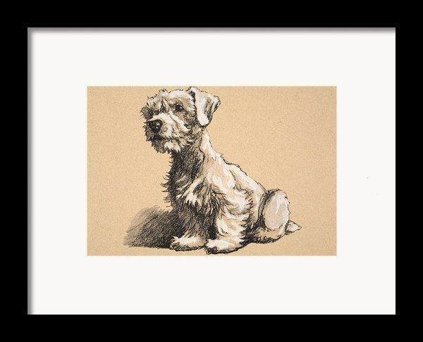 Sealyham Framed Print By Cecil Charles Windsor Aldin