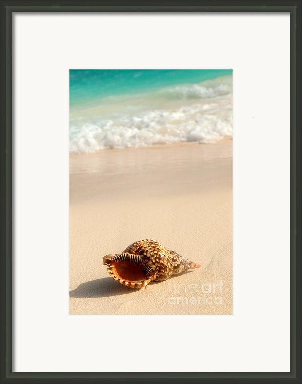 Seashell And Ocean Wave Framed Print By Elena Elisseeva