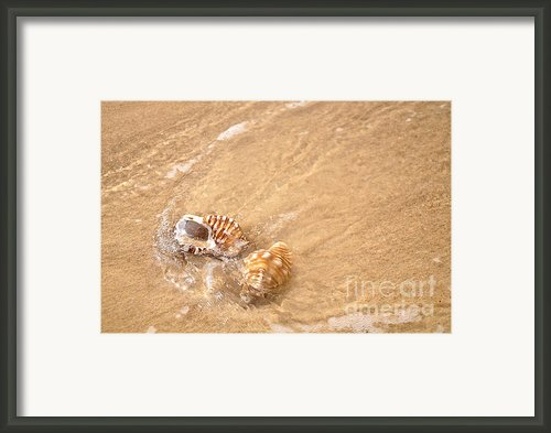 Seashell Turbulence Framed Print By Kaye Menner