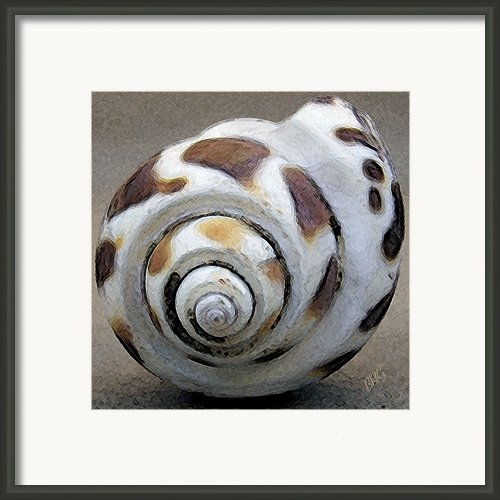 Seashells Spectacular No 2 Framed Print By Ben And Raisa Gertsberg