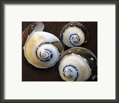 Seashells Spectacular No 23 Framed Print By Ben And Raisa Gertsberg